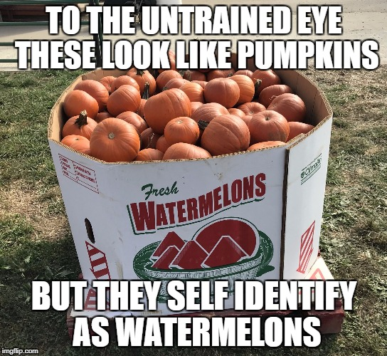 TO THE UNTRAINED EYE THESE LOOK LIKE PUMPKINS BUT THEY SELF IDENTIFY AS WATERMELONS | image tagged in identify | made w/ Imgflip meme maker