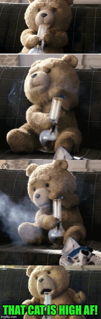 Ted | THAT CAT IS HIGH AF! | image tagged in ted | made w/ Imgflip meme maker