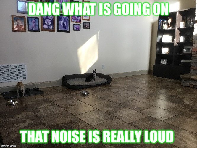 That noise is really annoying   |  DANG WHAT IS GOING ON; THAT NOISE IS REALLY LOUD | image tagged in omg cat | made w/ Imgflip meme maker