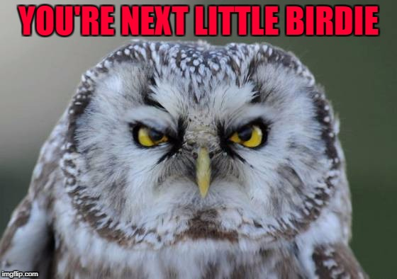 YOU'RE NEXT LITTLE BIRDIE | made w/ Imgflip meme maker