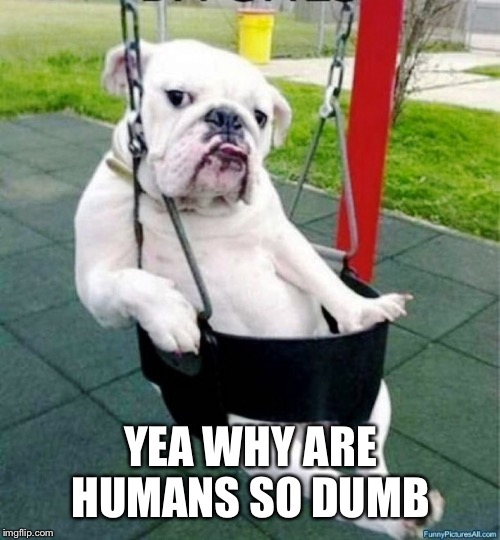 YEA WHY ARE HUMANS SO DUMB | made w/ Imgflip meme maker