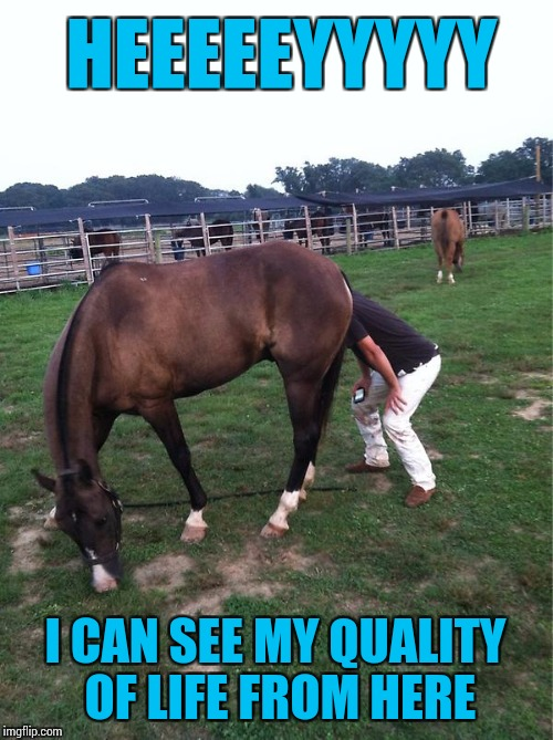 It's Poop | HEEEEEYYYYY I CAN SEE MY QUALITY OF LIFE FROM HERE | image tagged in memes,horses,poop | made w/ Imgflip meme maker