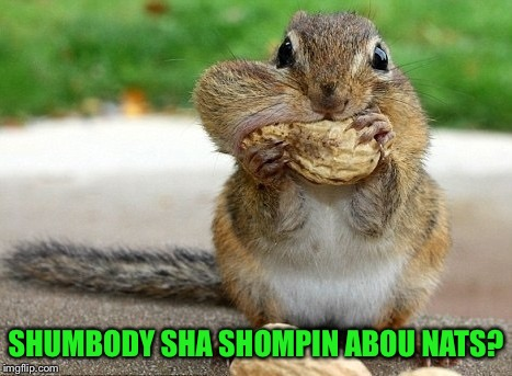 Someone say something about nuts? | SHUMBODY SHA SHOMPIN ABOU NATS? | image tagged in cute,chipmunk,nuts,funny memes | made w/ Imgflip meme maker