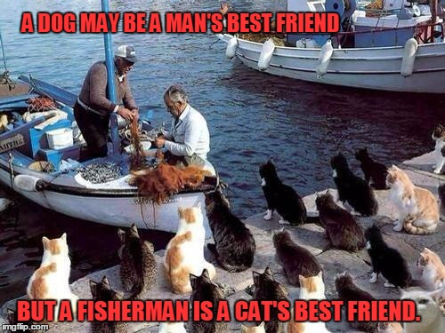I live chicken, I love liver, Meow Mix, Meow Mix, please deliver. | A DOG MAY BE A MAN'S BEST FRIEND BUT A FISHERMAN IS A CAT'S BEST FRIEND. | image tagged in funny,cats,fishermen,best friend | made w/ Imgflip meme maker
