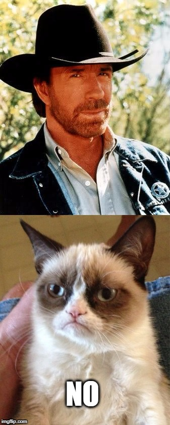 NO | image tagged in memes,meme wars,chuck norris,grumpy cat | made w/ Imgflip meme maker
