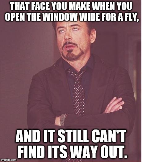 That face you make | THAT FACE YOU MAKE WHEN YOU OPEN THE WINDOW WIDE FOR A FLY, AND IT STILL CAN'T FIND ITS WAY OUT. | image tagged in that face you make | made w/ Imgflip meme maker