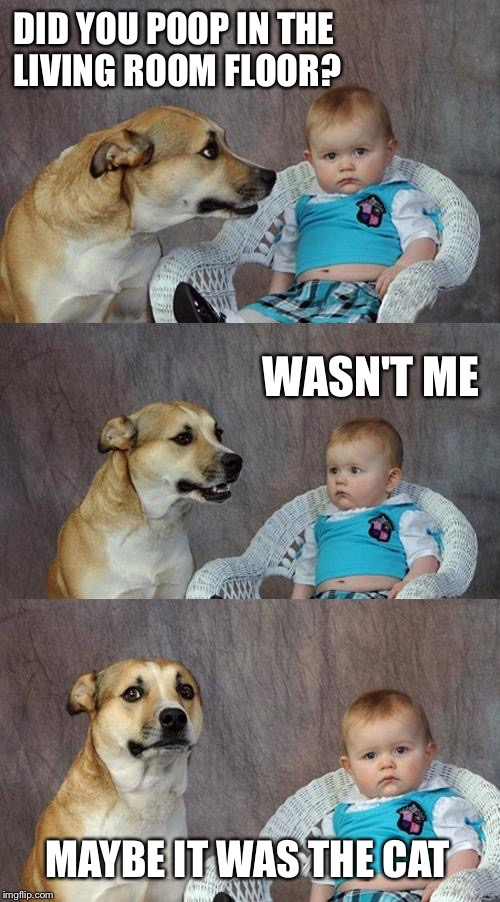 Dad Joke Dog Meme | DID YOU POOP IN THE LIVING ROOM FLOOR? MAYBE IT WAS THE CAT WASN'T ME | image tagged in memes,dad joke dog | made w/ Imgflip meme maker