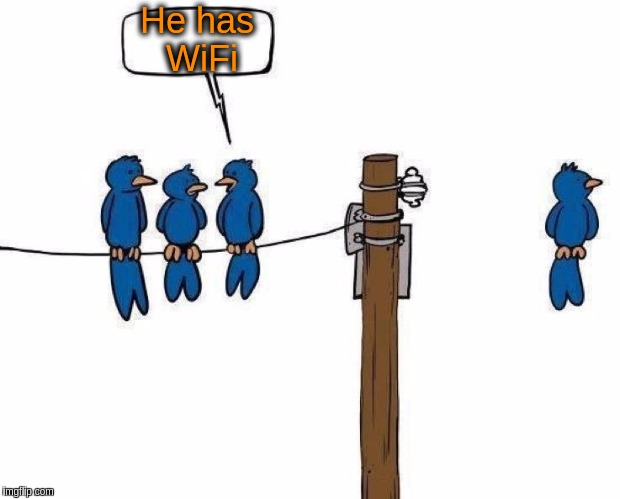 Even birds are tech'ing up!!!   <(^,^)>/ | He has WiFi | image tagged in memes,funny,cartoons,birds,wifi,technology | made w/ Imgflip meme maker