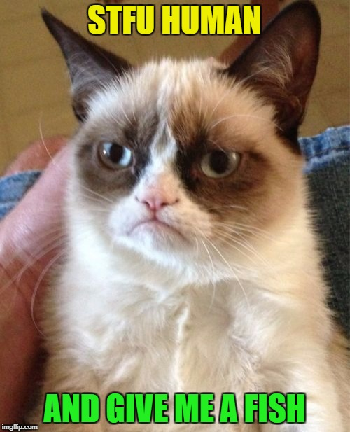 Grumpy Cat Meme | STFU HUMAN AND GIVE ME A FISH | image tagged in memes,grumpy cat | made w/ Imgflip meme maker