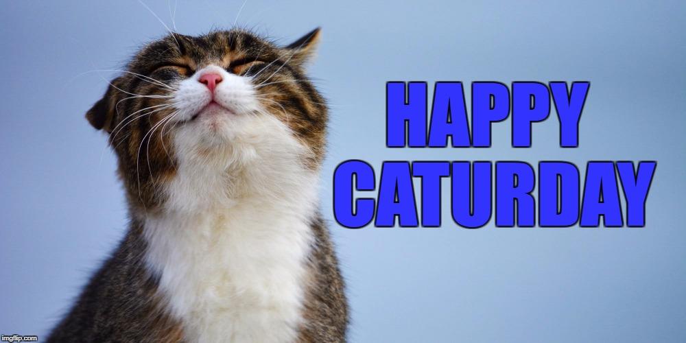 Image result for cat-ur-day images