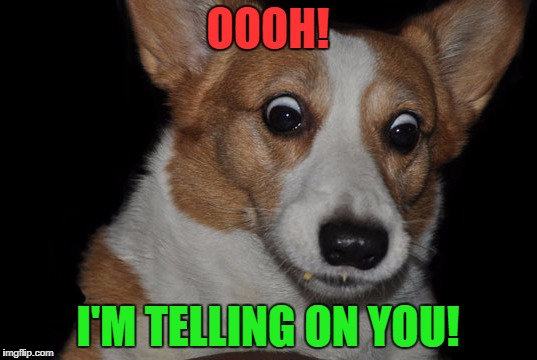 Corgi is going to tell on you. | OOOH! I'M TELLING ON YOU! | image tagged in surprised corgi | made w/ Imgflip meme maker