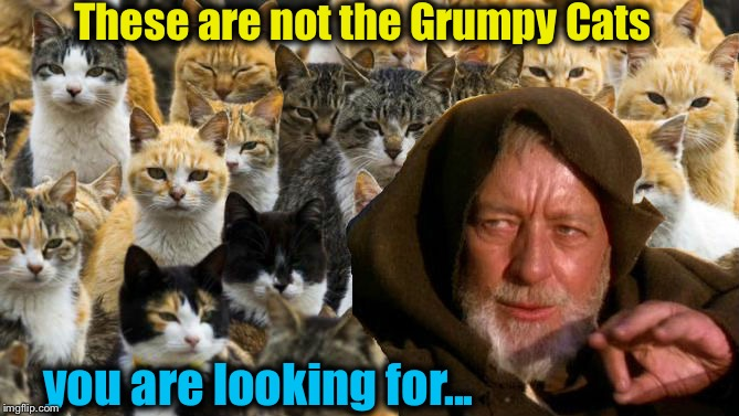 These are not the Grumpy Cats you are looking for... | made w/ Imgflip meme maker