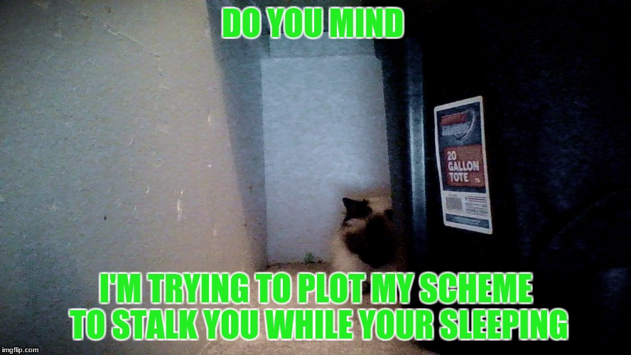 DO YOU MIND I'M TRYING TO PLOT MY SCHEME TO STALK YOU WHILE YOUR SLEEPING | image tagged in memes | made w/ Imgflip meme maker