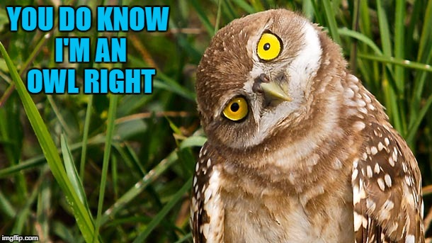 YOU DO KNOW I'M AN OWL RIGHT | made w/ Imgflip meme maker