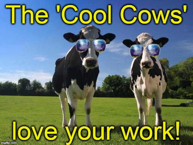 cool cows | The 'Cool Cows' love your work! | image tagged in cool cows | made w/ Imgflip meme maker