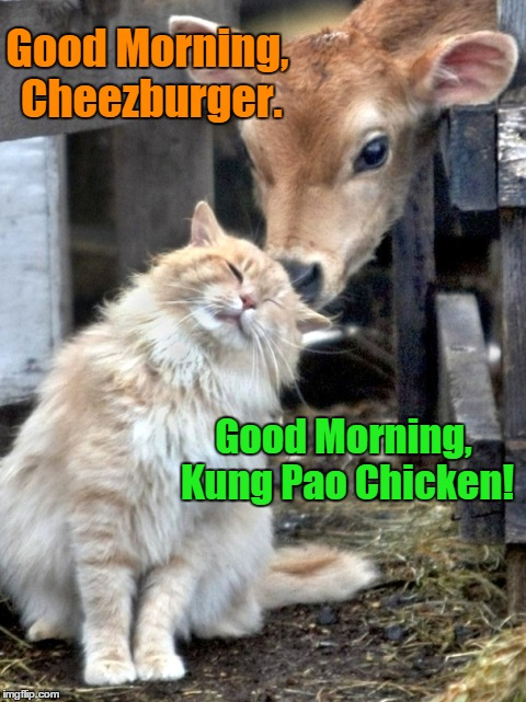 Good Morning, Cheezburger. Good Morning, Kung Pao Chicken! | made w/ Imgflip meme maker