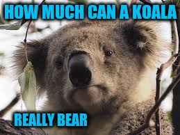 HOW MUCH CAN A KOALA REALLY BEAR | made w/ Imgflip meme maker
