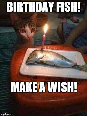 Birthday Fish | BIRTHDAY FISH! MAKE A WISH! | image tagged in birthday fish,funny cat memes,happy birthday cat | made w/ Imgflip meme maker