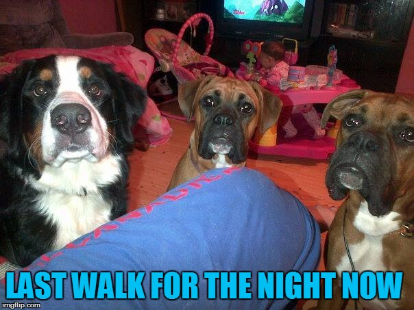dogs | LAST WALK FOR THE NIGHT NOW | image tagged in dogs | made w/ Imgflip meme maker
