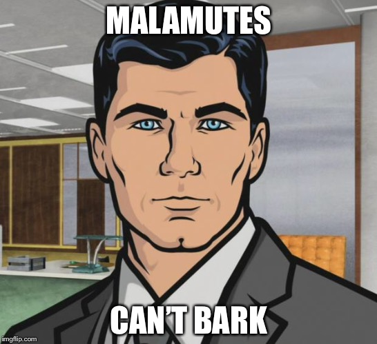 Archer Meme | MALAMUTES CAN'T BARK | image tagged in memes,archer | made w/ Imgflip meme maker