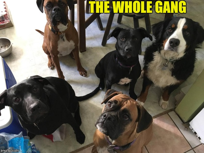 THE WHOLE GANG | made w/ Imgflip meme maker