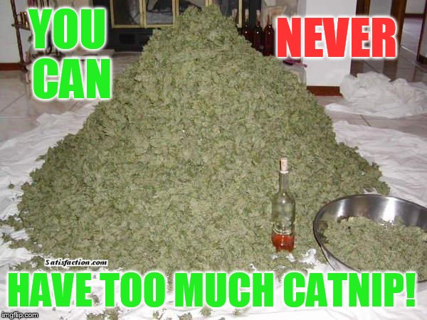 Too Much Catnip? | YOU CAN HAVE TOO MUCH CATNIP! NEVER | image tagged in memes,never,too much,catnip,marijuana,pile | made w/ Imgflip meme maker