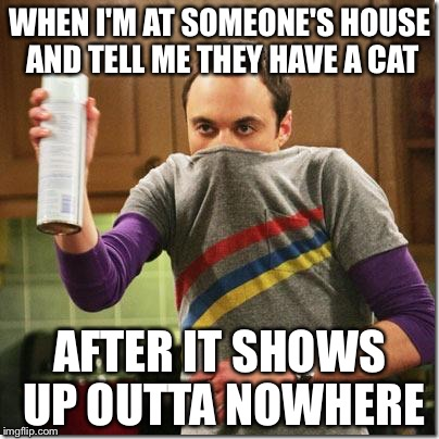 air freshener sheldon cooper | WHEN I'M AT SOMEONE'S HOUSE AND TELL ME THEY HAVE A CAT AFTER IT SHOWS UP OUTTA NOWHERE | image tagged in air freshener sheldon cooper | made w/ Imgflip meme maker