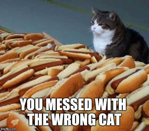 Hot-DOGS? | YOU MESSED WITH THE WRONG CAT | image tagged in hot-dogs | made w/ Imgflip meme maker