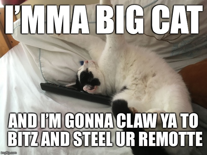 Imma big cat | I'MMA BIG CAT AND I'M GONNA CLAW YA TO BITZ AND STEEL UR REMOTTE | image tagged in imma big cat | made w/ Imgflip meme maker