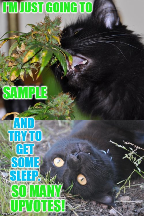Just a Sample and Sleep | I'M JUST GOING TO SO MANY UPVOTES! SAMPLE AND TRY TO GET SOME SLEEP. | image tagged in memes,cat,eating,marijuana,sleepy,so many upvotes | made w/ Imgflip meme maker