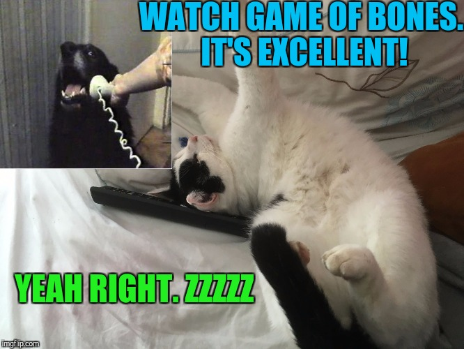 DOGGY LIKES BONES. KITTY LIKES NAPS. :D | WATCH GAME OF BONES. IT'S EXCELLENT! YEAH RIGHT. ZZZZZ | image tagged in imma big cat,funny,memes,cats,dogs,animals | made w/ Imgflip meme maker