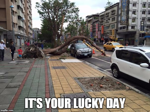 what are the odds? | IT'S YOUR LUCKY DAY | image tagged in lucky,tree | made w/ Imgflip meme maker