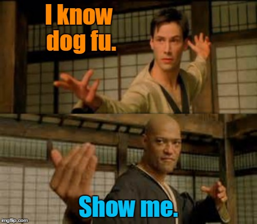 I know dog fu. Show me. | made w/ Imgflip meme maker
