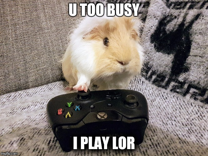 U too busy I play lor | U TOO BUSY I PLAY LOR | image tagged in guinea pig | made w/ Imgflip meme maker