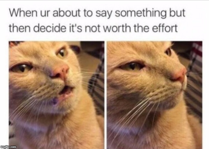 do this a lot | image tagged in funny,funny memes,cats,caturday | made w/ Imgflip meme maker