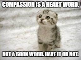Sad Cat | COMPASSION IS A HEART WORD, NOT A BOOK WORD. HAVE IT OR NOT. | image tagged in memes,sad cat | made w/ Imgflip meme maker