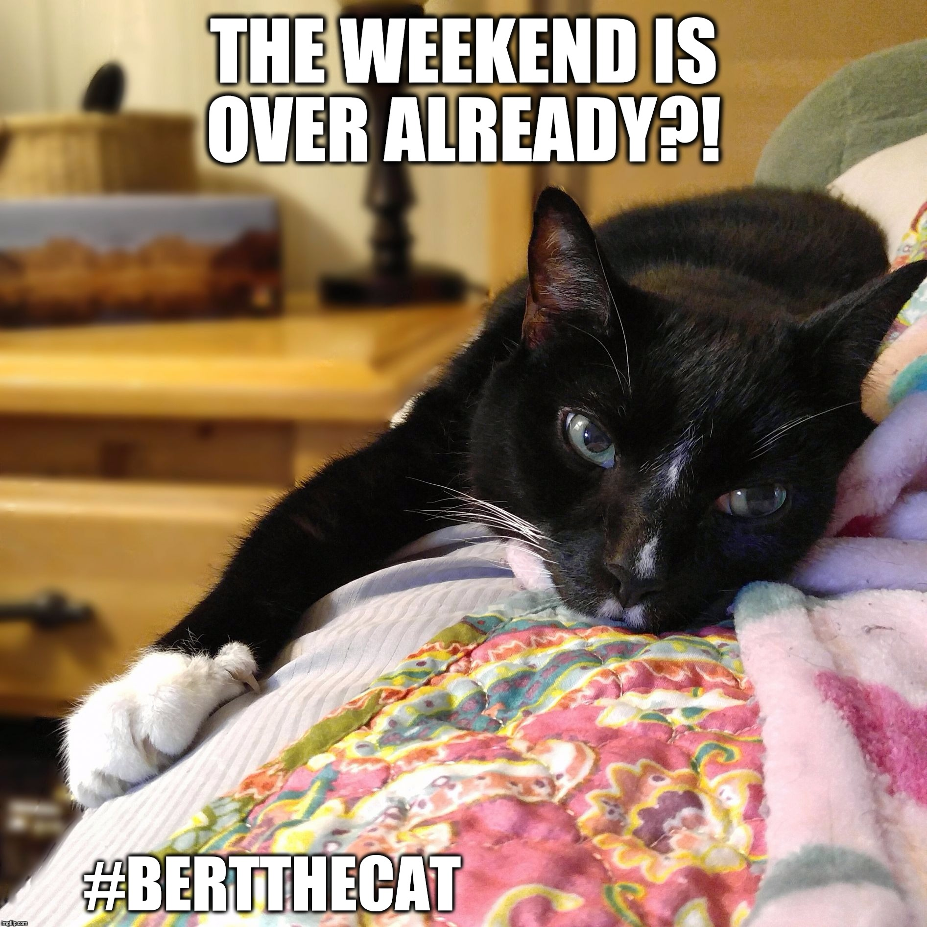 The weekend is over already?!  | THE WEEKEND IS OVER ALREADY?! #BERTTHECAT | image tagged in bert the cat,the weekend is over,weekend,memes,cute,cats | made w/ Imgflip meme maker