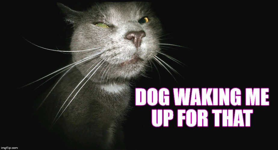 Stalker Cat | DOG WAKING ME UP FOR THAT | image tagged in stalker cat | made w/ Imgflip meme maker