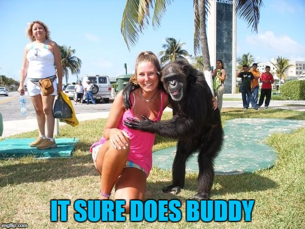 IT SURE DOES BUDDY | made w/ Imgflip meme maker