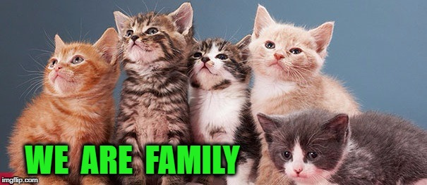 We Are Family | WE  ARE  FAMILY | image tagged in cute cats | made w/ Imgflip meme maker
