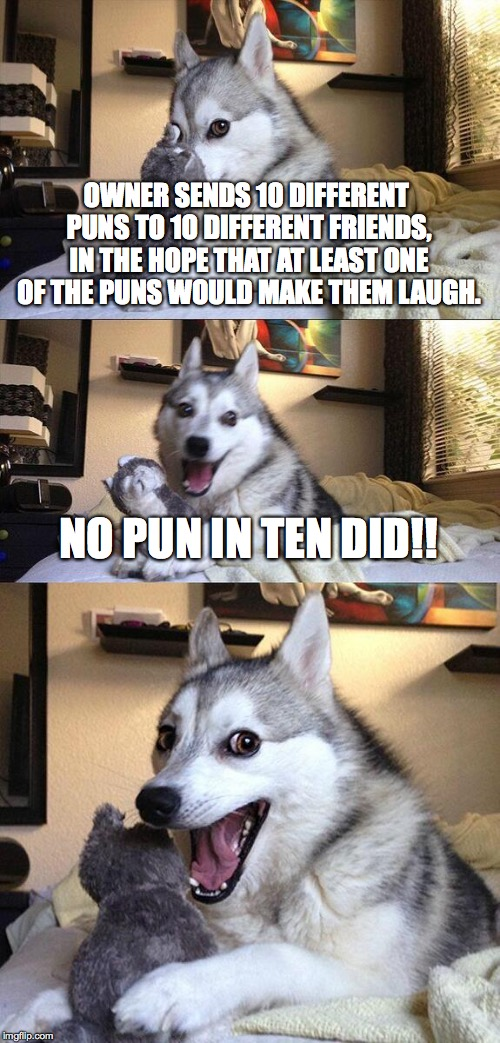 Bad Pun Dog Meme | OWNER SENDS 10 DIFFERENT PUNS TO 1O DIFFERENT FRIENDS, IN THE HOPE THAT AT LEAST ONE OF THE PUNS WOULD MAKE THEM LAUGH. NO PUN IN TEN DID!! | image tagged in memes,bad pun dog | made w/ Imgflip meme maker