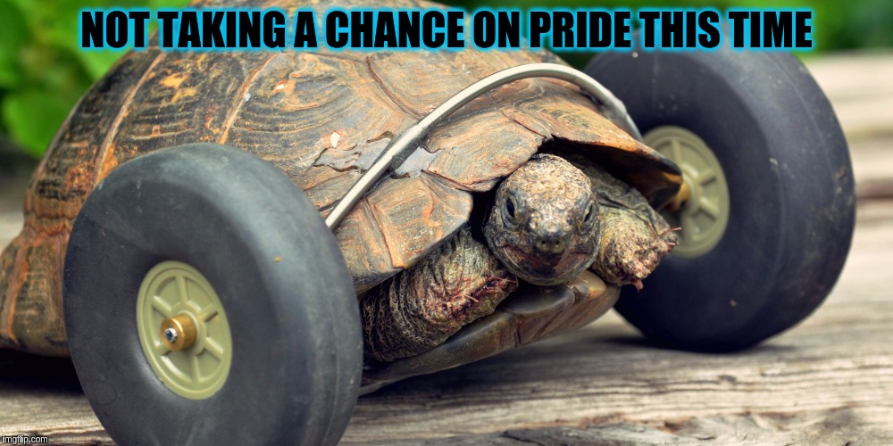 Why rely on your opponent to fail when you can up the game yourself. (ɔ◔︣‿◔︣)ɔ | NOT TAKING A CHANCE ON PRIDE THIS TIME | image tagged in memes,funny,tortoise,animals,wheels,racing | made w/ Imgflip meme maker