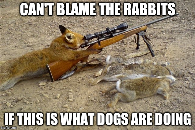 CAN'T BLAME THE RABBITS IF THIS IS WHAT DOGS ARE DOING | made w/ Imgflip meme maker