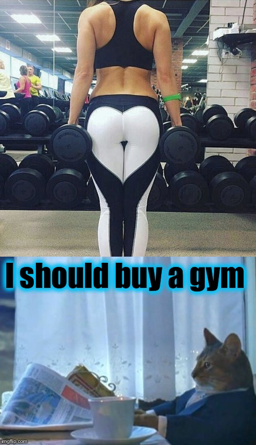 As long as the gym has a bar where I can do some 12oz curls... | I should buy a gym | image tagged in i should buy a boat cat,evilmandoevil,gym memes,memes | made w/ Imgflip meme maker