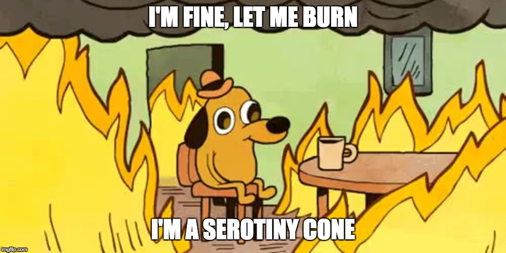House on fire dog | I'M FINE, LET ME BURN I'M A SEROTINY CONE | image tagged in house on fire dog | made w/ Imgflip meme maker
