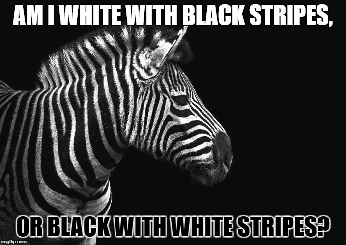 Zebra Black or White | AM I WHITE WITH BLACK STRIPES, OR BLACK WITH WHITE STRIPES? | image tagged in memes,zebra,bw,black white week,bw meme week | made w/ Imgflip meme maker