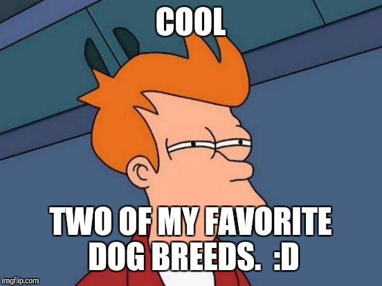 Futurama Fry Meme | COOL TWO OF MY FAVORITE DOG BREEDS.  :D | image tagged in memes,futurama fry | made w/ Imgflip meme maker