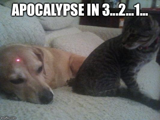 APOCALYPSE IN 3...2...1... | image tagged in funny,dog vs cat | made w/ Imgflip meme maker