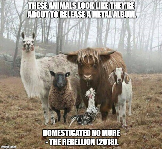 domesticated no more | THESE ANIMALS LOOK LIKE THEY'RE ABOUT TO RELEASE A METAL ALBUM. DOMESTICATED NO MORE - THE REBELLION (2018). | image tagged in domesticated no more,joke,2018,metal,album,rebellion | made w/ Imgflip meme maker