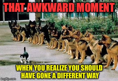The awkward moment between alpha male and the pussy cat | THAT AWKWARD MOMENT WHEN YOU REALIZE YOU SHOULD HAVE GONE A DIFFERENT WAY | image tagged in dogs,cats,awkward moment,alpha male | made w/ Imgflip meme maker